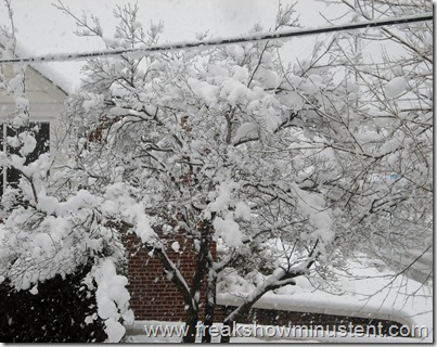 neighbors tree full of snow, 3/6/13