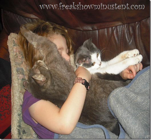 little girl asleep in chair with two cats